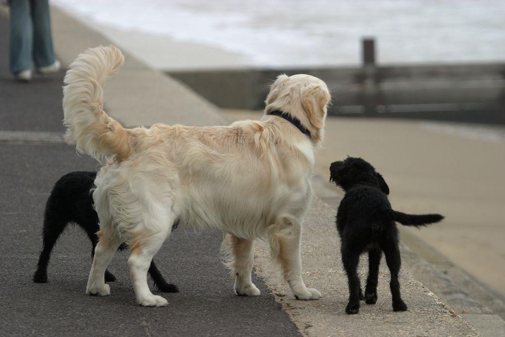 chien remue queue